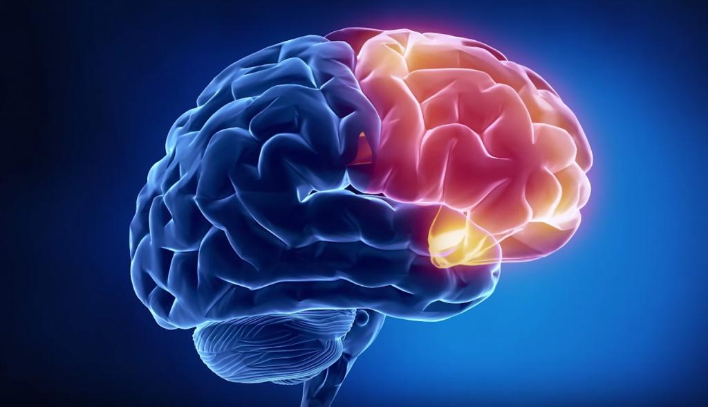 тайны мозга, нлп, коучинг, психотерапия, нлп таллинн, коучинг таллинн