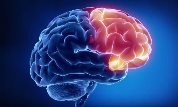 7 документальных фильмов о мозге